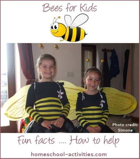 Bees for kids: fun facts.