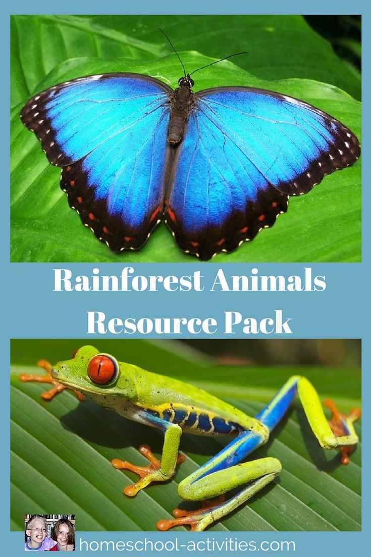 rainforest animals resource pack
