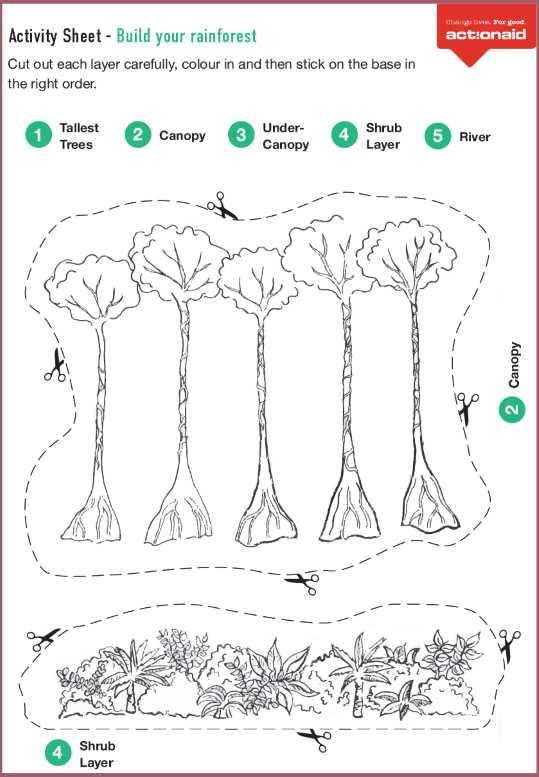 Build a rainforest
