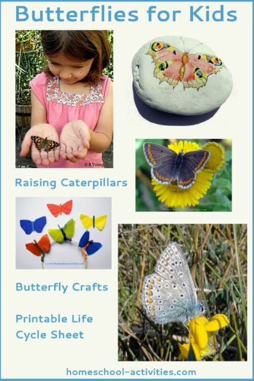 butterfly life cycle activities