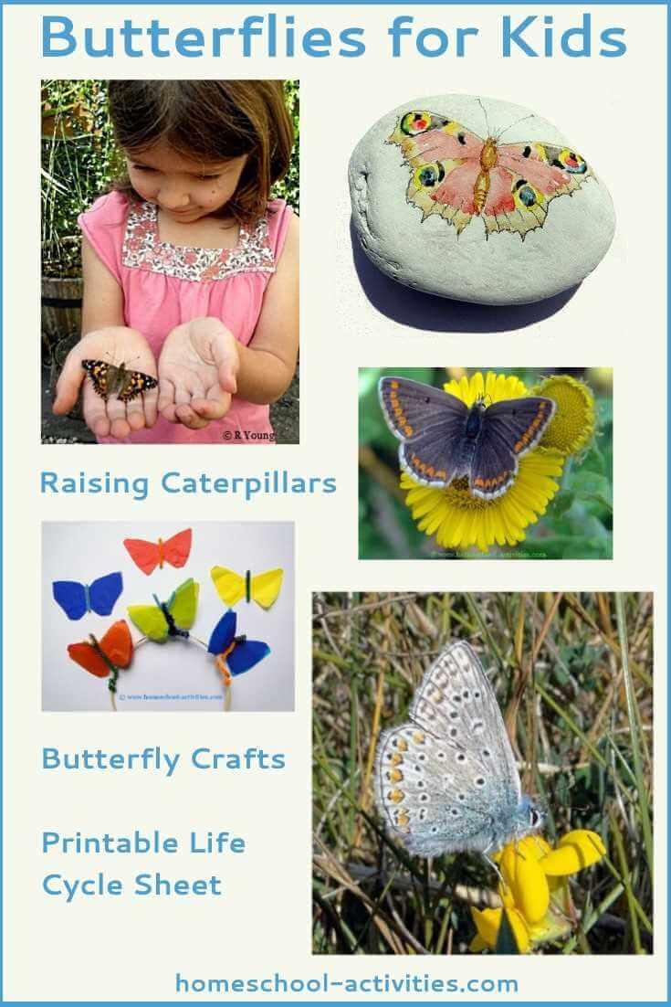 butterflies for kids