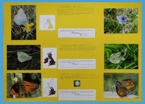 butterfly life cycle high school activities