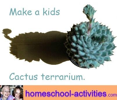 make a kids cactus terrarium