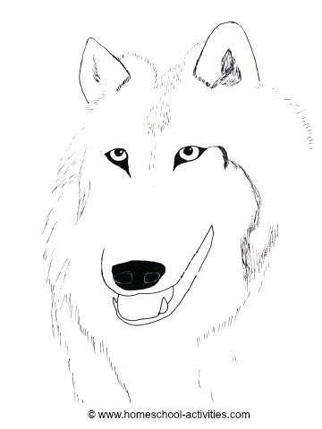 wolf coloring page for older kids