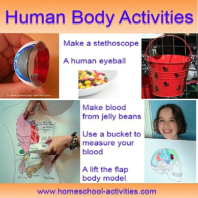 human body activities for kids