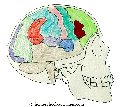 Human body coloring pages for kindergarten