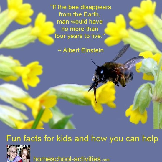 if the bee disappears from the Earth, man would have no more than 4 years to live