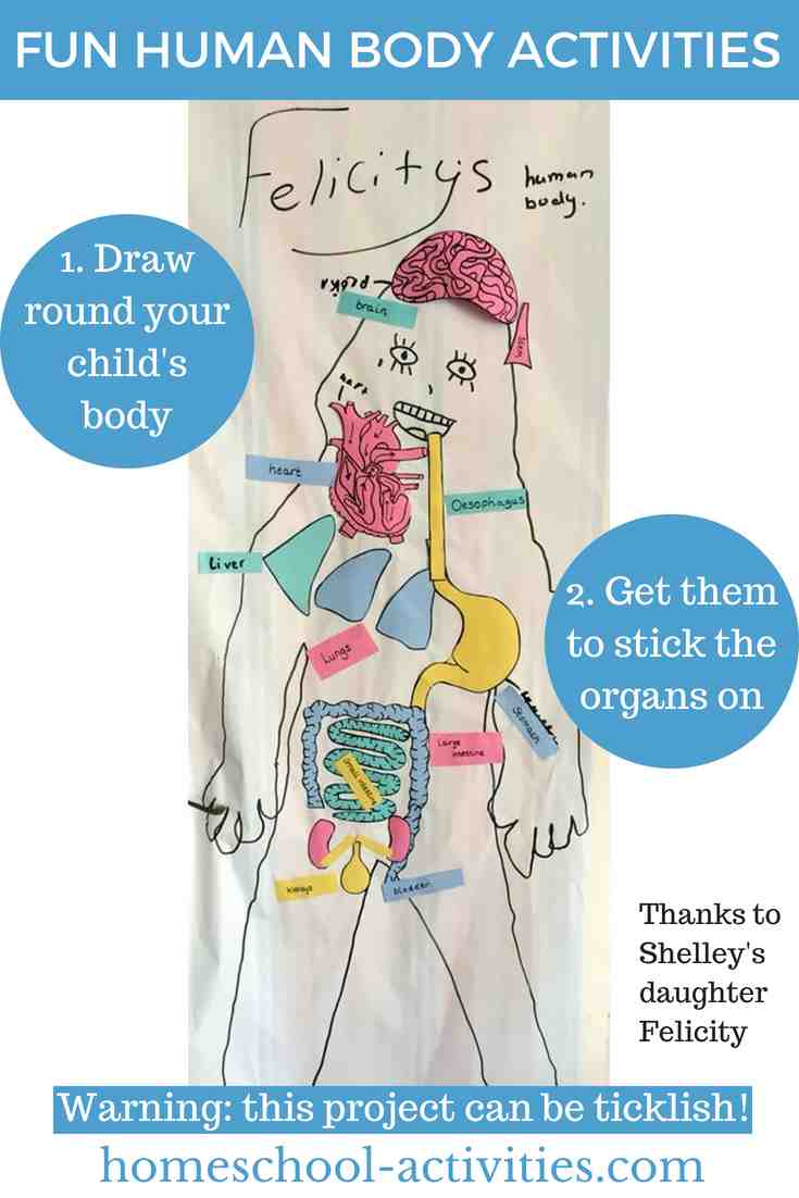 Human Body For Kids Activities And Facts
