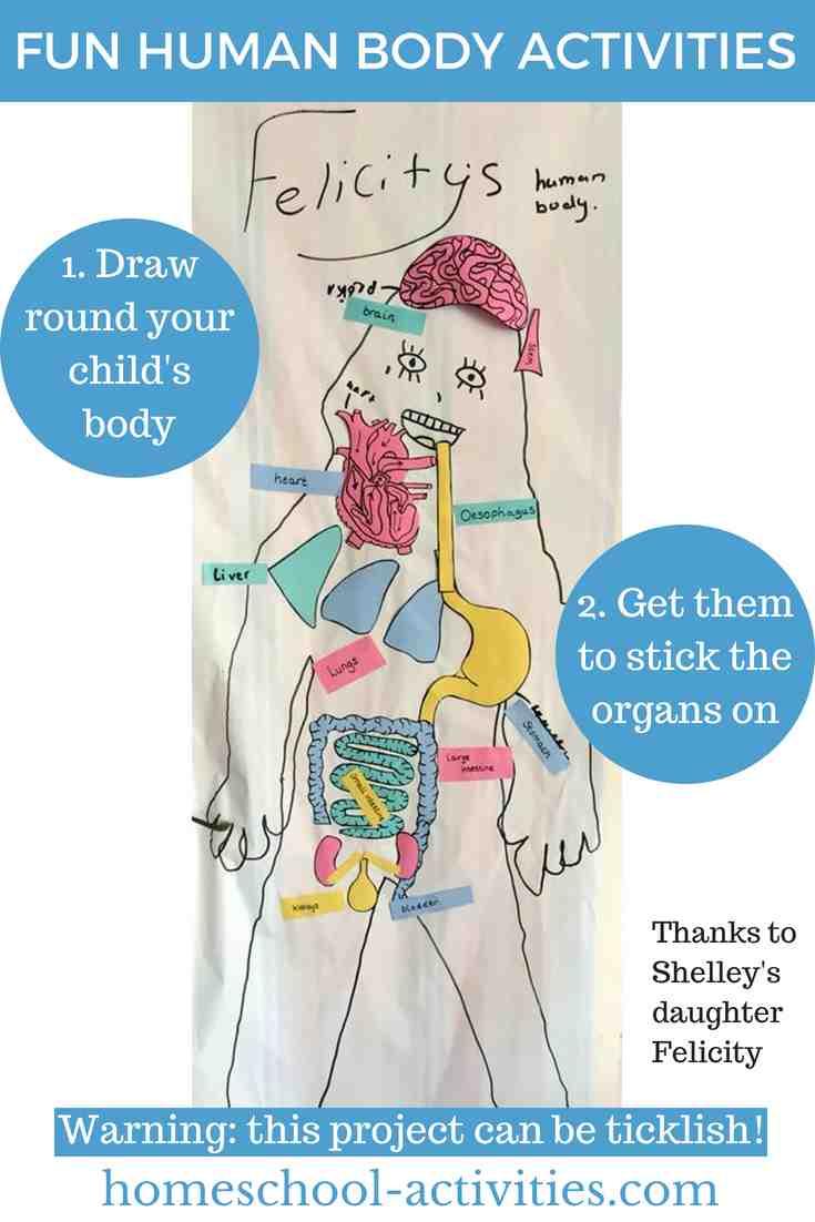 Learn body organs