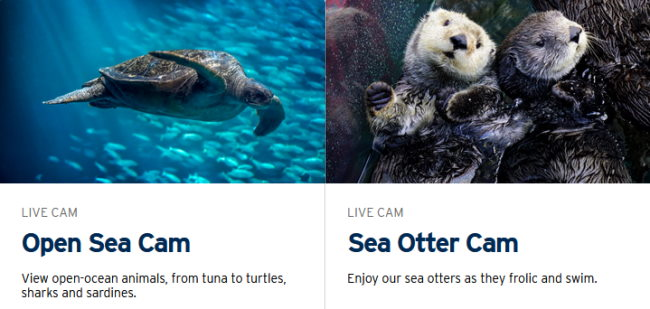 Monterey Bay live web cams of the sea