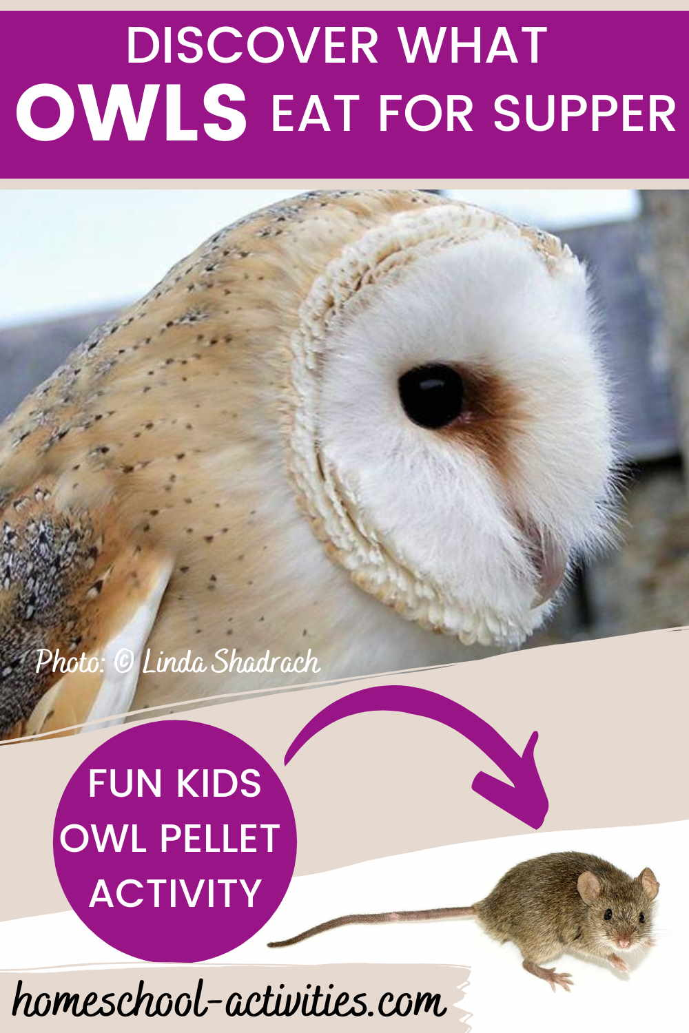 Owl pellet dissection activities for kids
