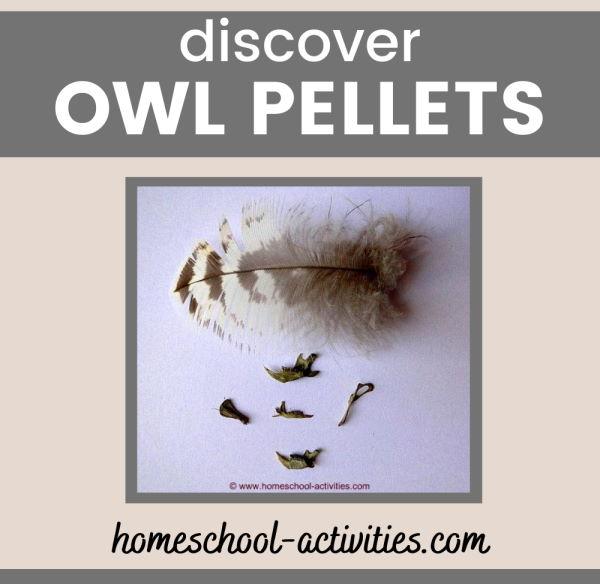 Owl pellet dissection rodent bones