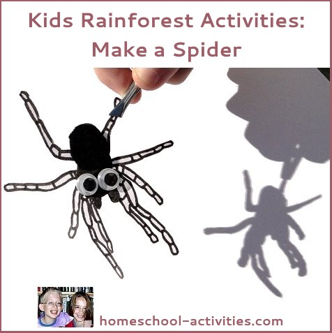 making a spider to go in the rainforest
