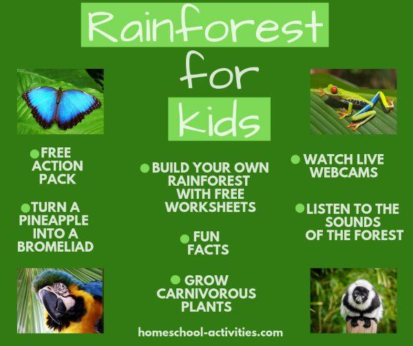 rainforest for kids activities