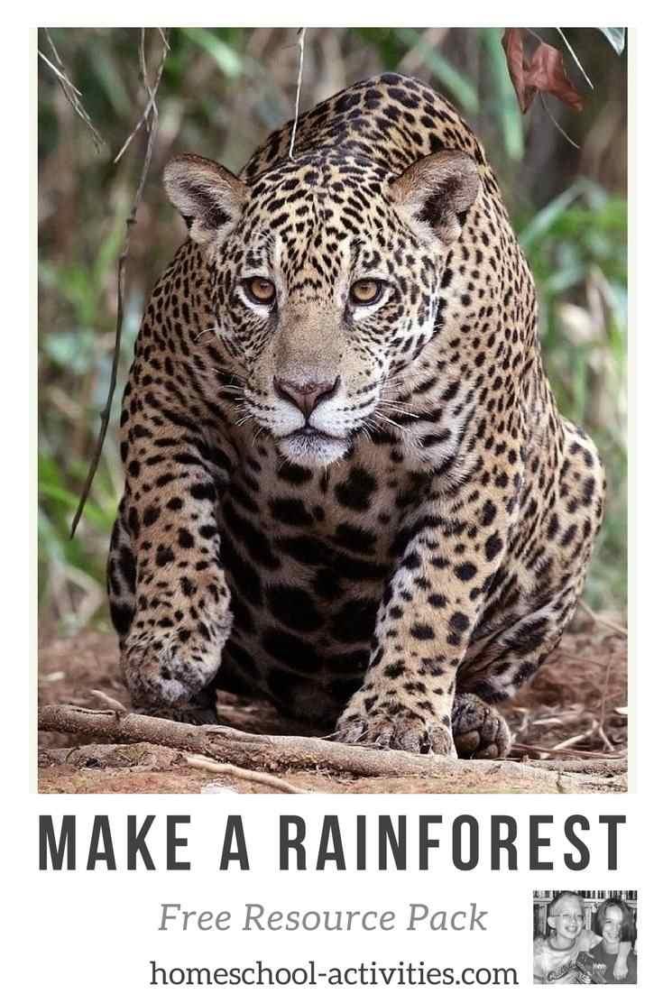 Rainforest resource pack