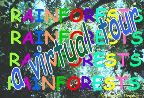 rainforest virtual tour