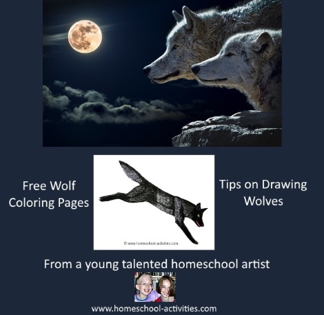 tips on drawing wolves