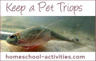 keep a pet triops