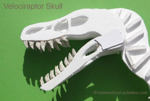 velociraptor model skull