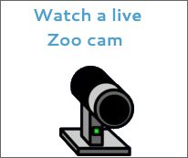 watch a live zoo cam now