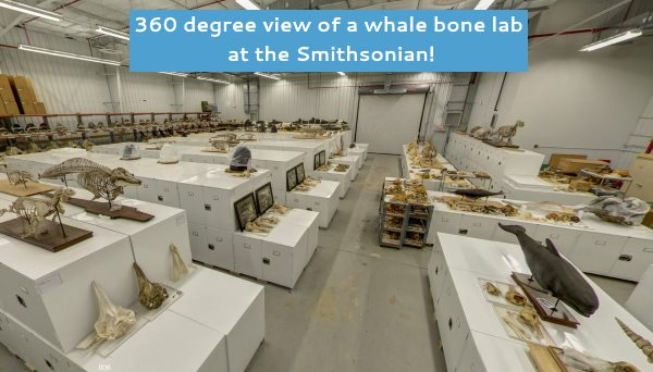 Whale bone laboratory at the Smithsonian