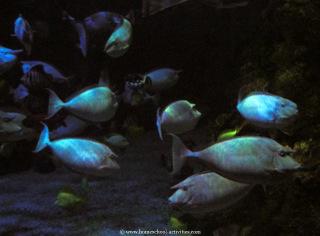aquarium fis