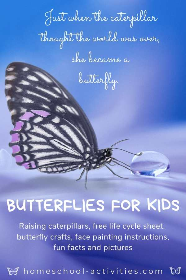 Butterflies for kids