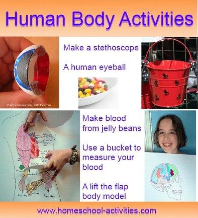 Human body activities for kids.