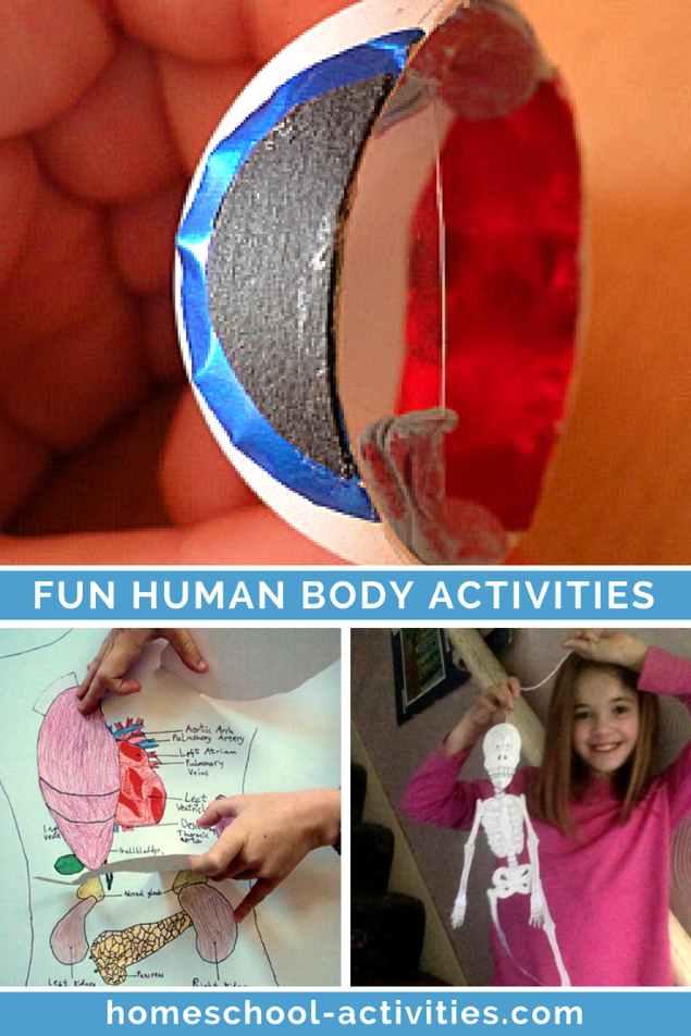 fun human body activities