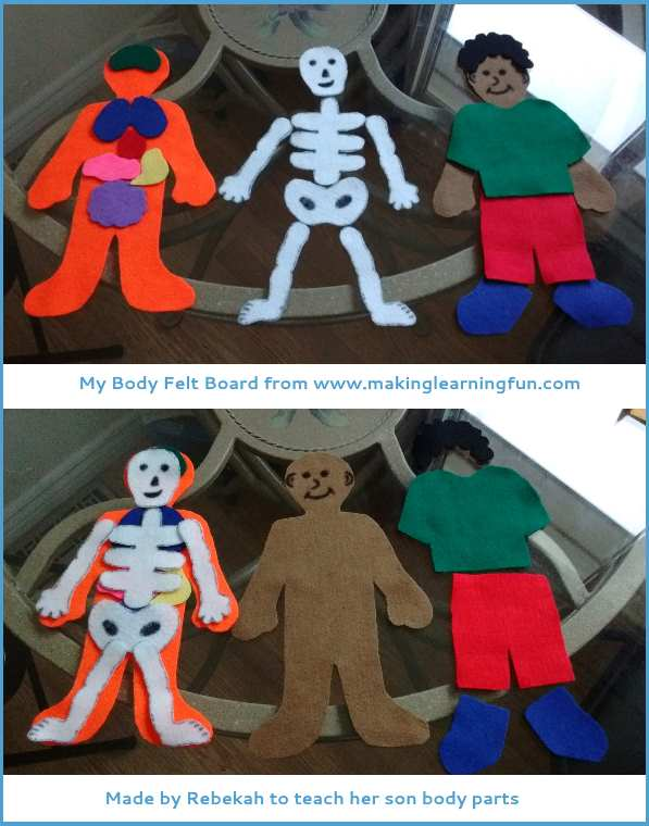 human body parts felt model