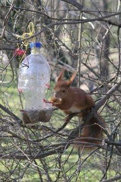 squirrel on feeder