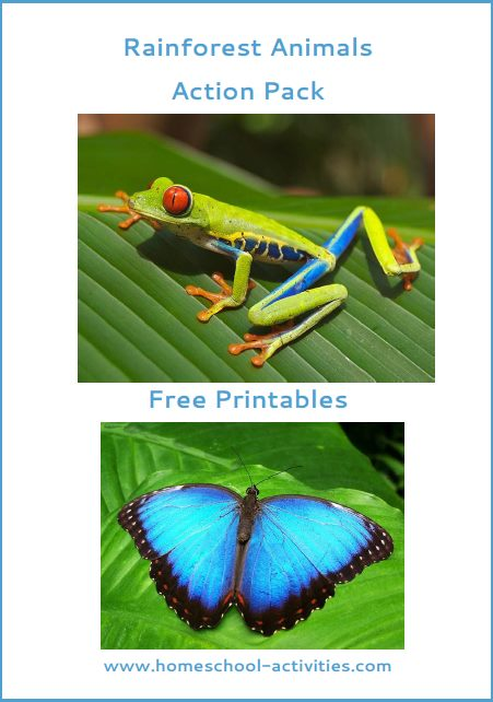 Free rainforest animal action pack