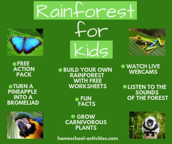 rainforest for kids activities