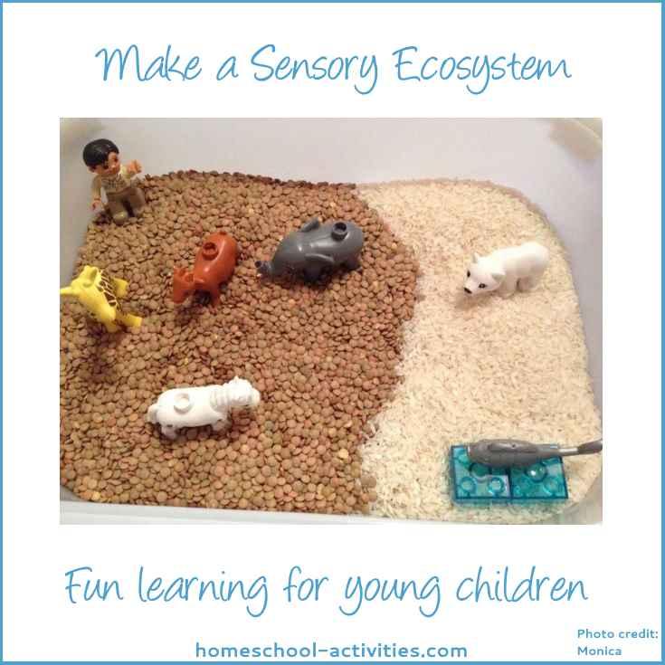 Make a sensory ecosystem