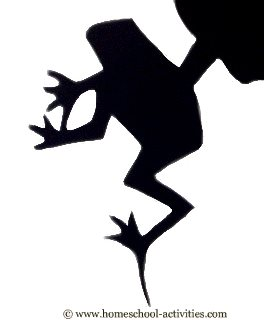 shadow of rainforest frog
