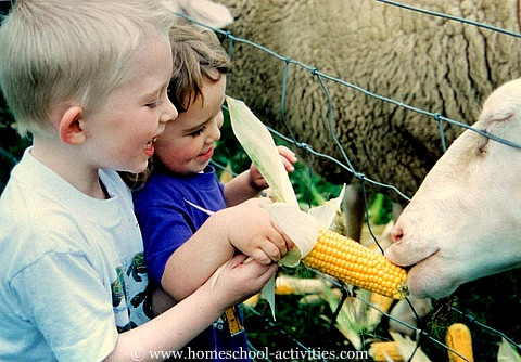 kids at an animal park feeding sheep